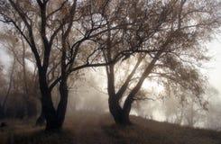 Contornos de árboles viejos en una niebla Fotos de archivo libres de regalías