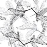 Contornos de las hojas en un fondo blanco modelo inconsútil floral, Fotografía de archivo libre de regalías