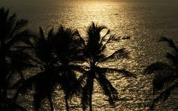 Contornos de las palmas de coco en la puesta del sol y el océano, Kerala, la India del sur Imagen de archivo libre de regalías