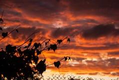 Contornos de los árboles en el fondo de la puesta del sol Imagen de archivo
