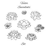 Contornos dibujados mano de los succulents del vector fijados aislados ilustración del vector