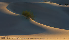 Contornos finos de las dunas de arena Imagen de archivo