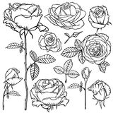 Contour beautiful roses flower set Royalty Free Stock Photos