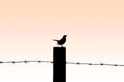 Contour of bird against a sunset Royalty Free Stock Photography