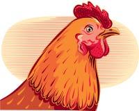 Contour chicken head Stock Photos