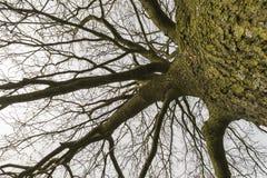 Contour d'arbre avec des branches image stock