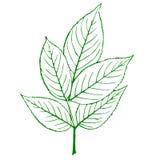 Contour d'une plante verte Photo libre de droits