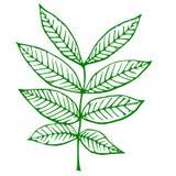 Contour d'une plante verte Image libre de droits