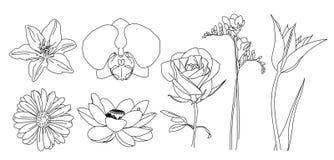 Contour de vecteur de fleurs Photographie stock