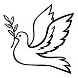 Contour dove with branch. Vector illustrations of contour white dove with a palm branch Stock Photos