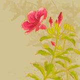 Allamanda flower on toned background Stock Image