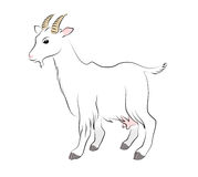 Contour drawing goat. Figure goat on a white background Stock Photography