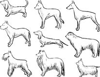Contour drawings of the different dogs Stock Photography