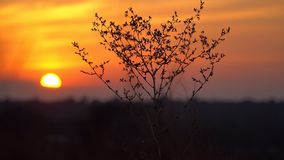 Contour droge struik bij zonsondergangachtergrond Stock Fotografie