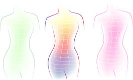Contour of a female body.  Royalty Free Stock Photography