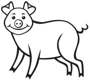 Cute piggy Stock Photography