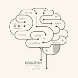 Contour linéaire plat Brain Concept d'éducation d'Infographic Vecteur Images libres de droits