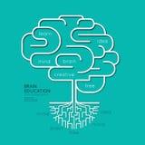Contour linéaire plat Brain Roots Concept d'éducation d'Infographic Photo stock