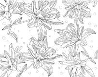 Contour monochrome drawing of lilies on a white background Royalty Free Stock Image