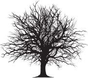 Contour noir d'arbre Photographie stock