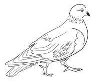 Free Contour Of Pigeon Royalty Free Stock Photos - 143044998
