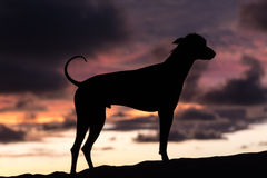Contour of a Peruvian hairless dog Royalty Free Stock Image