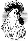 Contour rooster head Royalty Free Stock Images