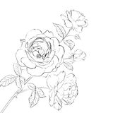 Contour of rose. Royalty Free Stock Images