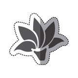 Contour rose with pointed petals icon. Illustraction design Stock Photo
