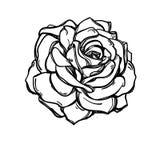 Contour Rose Tattoo rosebud Royalty-vrije Stock Foto