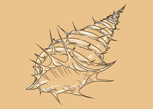 Contour shell. Shell contour on an orange background with flares vector illustration