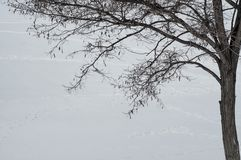 The contour of the tree. On the snow background Royalty Free Stock Photo