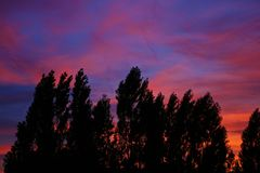 Contour of trees with colorful sunset stock images