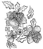 Contoured flower illustration. A set of stylized contour floral illustrations with spots and dots. flowers and leafs Royalty Free Stock Image