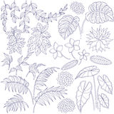 Contoured set of leaves and flowers royalty free illustration