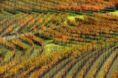 Contouren - de bogen van de Rijenschrijver over een wijngaard royalty-vrije stock foto's