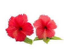 contouren van bloemen op een witte achtergrond Royalty-vrije Stock Afbeelding