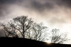 contouren van bomen op een heuvel bij zonsondergang stock afbeelding