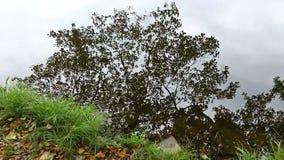 Contouren van de herfstboom de waterspiegel worden overdacht die stock videobeelden