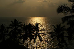 Contouren van de kokospalmen bij zonsondergang en oceaan, Kerala, Zuid-India stock foto's