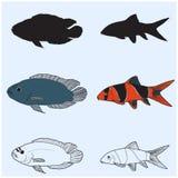 The contours of aquarium fish.Botia macracanthus, Clown Loach.Cichlidae Royalty Free Stock Photo