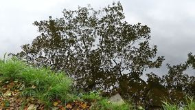 Contours of autumn tree reflected on the water surface. Contours of autumn tree and cloudy sky reflected on the water surface. Small waves on the water stock video footage