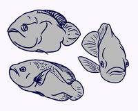 The contours of the fish Royalty Free Stock Photos