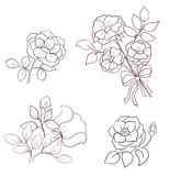 Contours flowers of wild rose Royalty Free Stock Photography