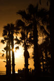Contours of palm trees and people at sunset. Sepia. Stock Image
