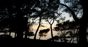 Contours of the trees on the background of a sunset at sea Stock Image