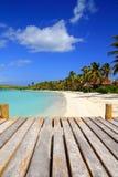 Contoy Inselpalme treesl karibischer Strand Mexiko Stockfotos