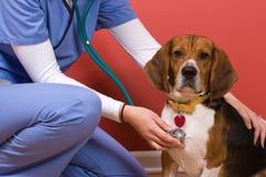 Contrôle de vétérinaire Images libres de droits