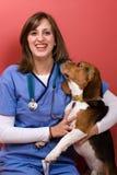 Contrôle de vétérinaire Photographie stock libre de droits