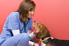 Contrôle de vétérinaire Images stock